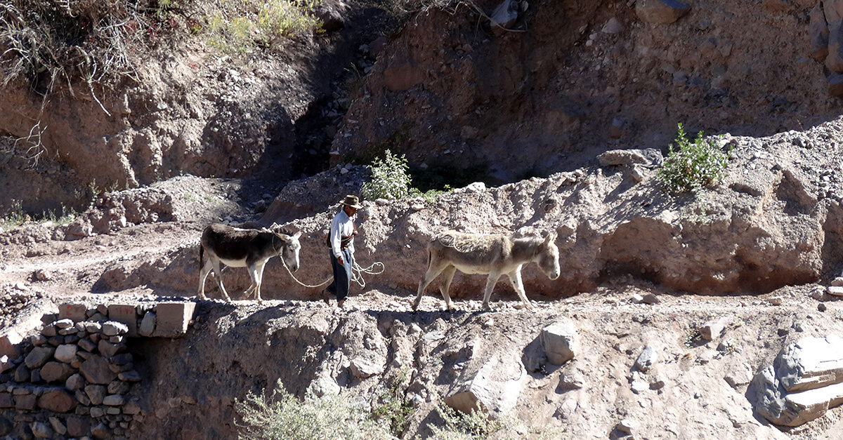 Trekking Colca Canyon solo - Man with donkeys