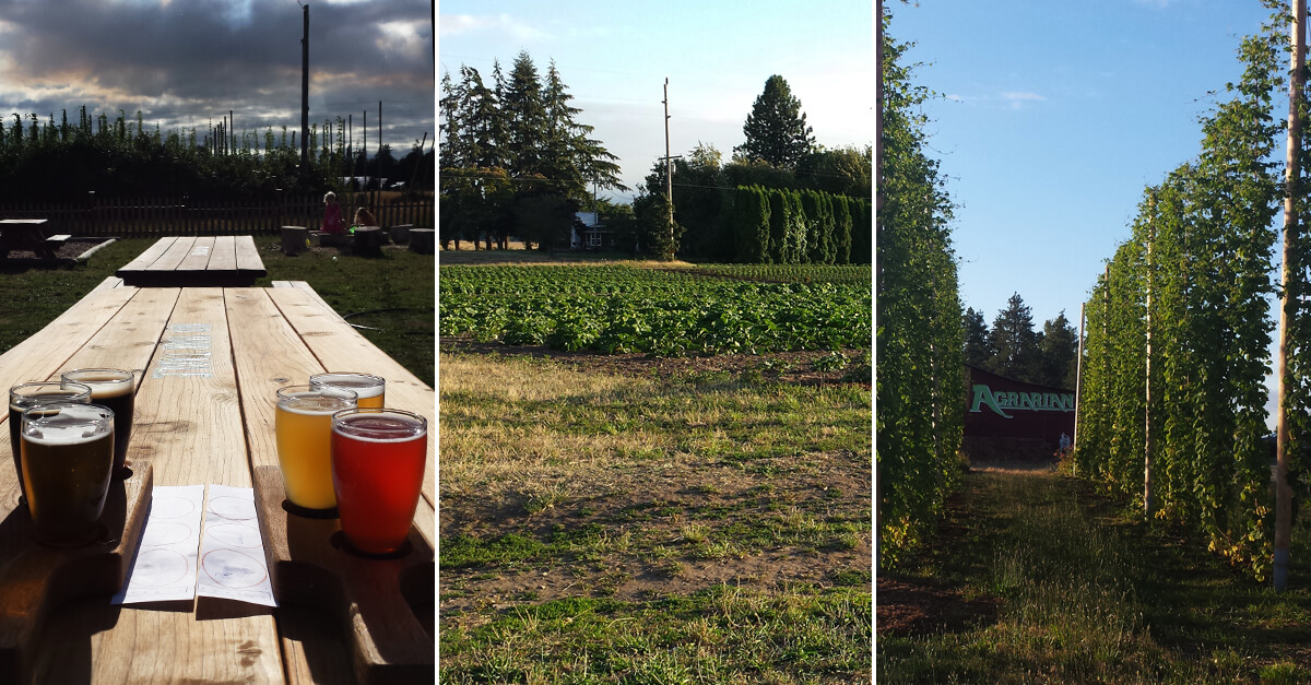 Craft breweries with a view - Agrarian