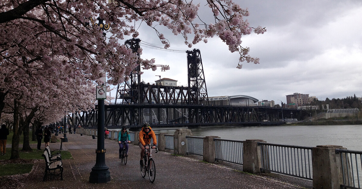 Stuff to do in Portland Oregon - Cherry Blossoms by bike